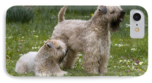 Soft-coated Wheaten Terriers IPhone Case by Jean-Louis Klein & Marie-Luce Hubert