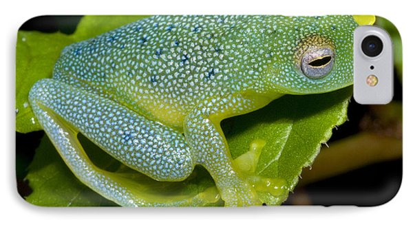 Spiny Glass Frog Phone Case by Dante Fenolio