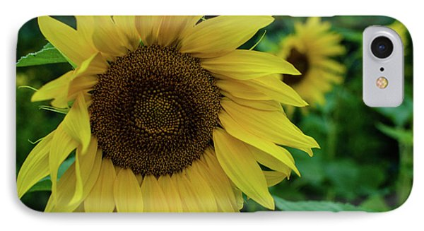Sunflower Fields IPhone Case by Miguel Winterpacht