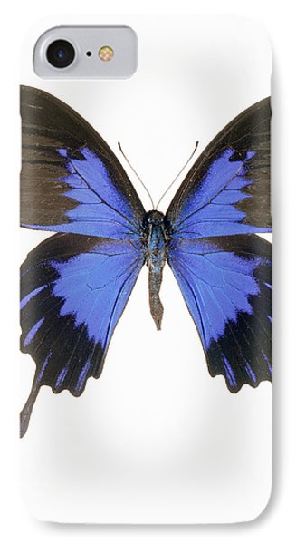 Swallowtail Butterfly Phone Case by Lawrence Lawry