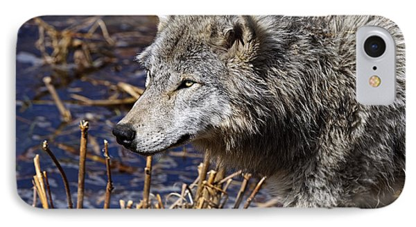 IPhone Case featuring the photograph Timber Wolf by Michael Cummings