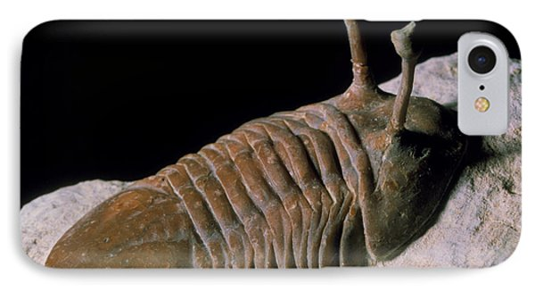 Trilobite Fossil IPhone Case by Sinclair Stammers