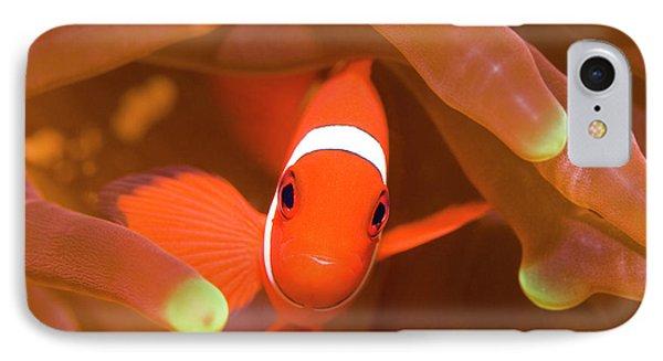Tropical Fish Clownfish Phone Case by MotHaiBaPhoto Prints