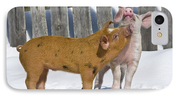 Two Piglets Playing IPhone Case by Jean-Louis Klein and Marie-Luce Hubert