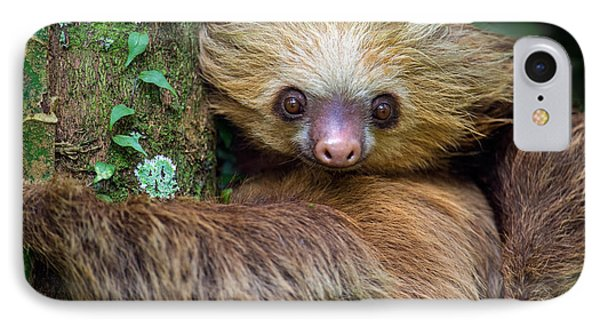 Two-toed Sloth Choloepus Didactylus IPhone Case by Panoramic Images
