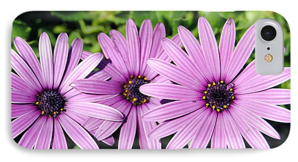 The African Daisy 2 IPhone Case by Isam Awad