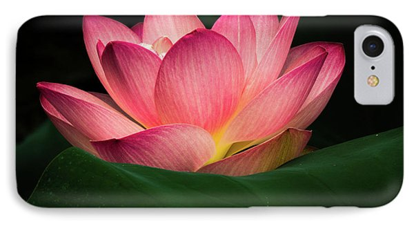 Water Lily IPhone Case by Jay Stockhaus