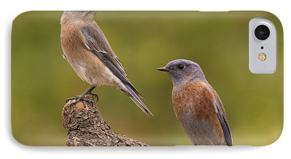 Western Bluebird Phone Case by Doug Herr