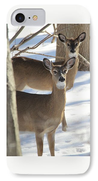 White Tailed Deer Smithtown New York IPhone Case by Bob Savage