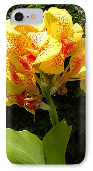 IPhone Case featuring the photograph Yellow Canna Lily by Terri Mills