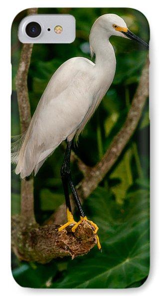 IPhone Case featuring the photograph White Egret by Christopher Holmes