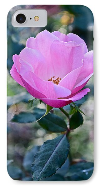 2015 After The Frost At The Garden Pink  Rose IPhone Case