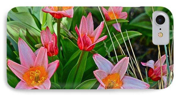 2016 Acewood Tulips 2 IPhone Case by Janis Nussbaum Senungetuk
