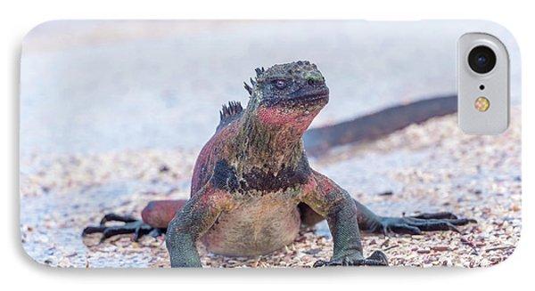 Marine Iguana On Galapagos Islands IPhone Case