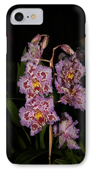 Cattleya Style Orchids IPhone Case by Carol Ailles