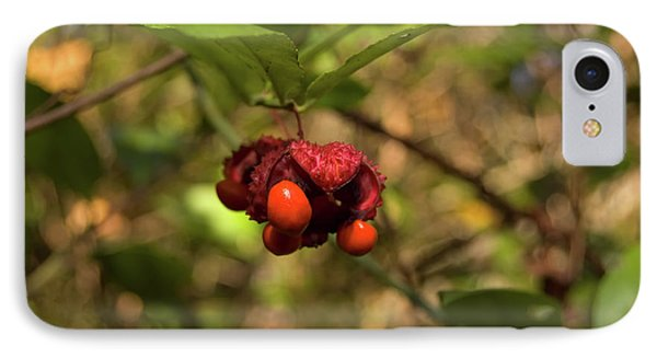 American Strawberry Bush IPhone Case by Rich Leighton