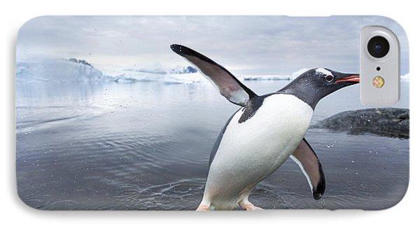 Antarctica, Cuverville Island, Gentoo IPhone Case