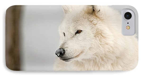 Arctic Wolf Portrait IPhone Case