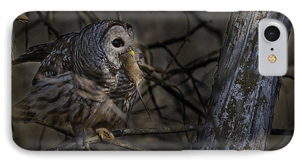 IPhone Case featuring the photograph Barred Owl In Pine Tree by Michael Cummings