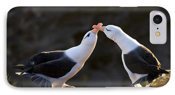 Black-browed Albatross Couple IPhone Case