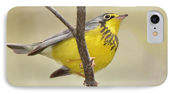 Canada Warbler IPhone Case