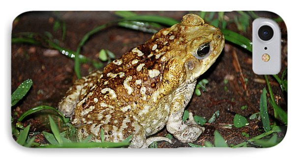 Cane Toad IPhone Case by Breck Bartholomew