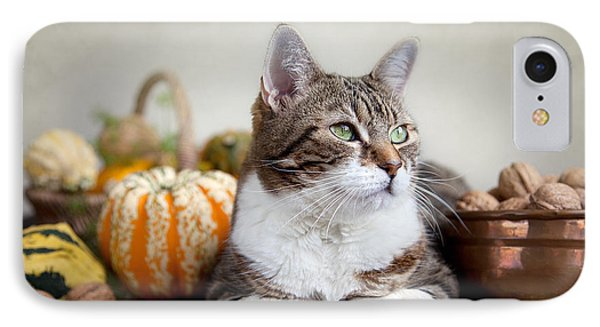 Cat And Pumpkins IPhone Case by Nailia Schwarz