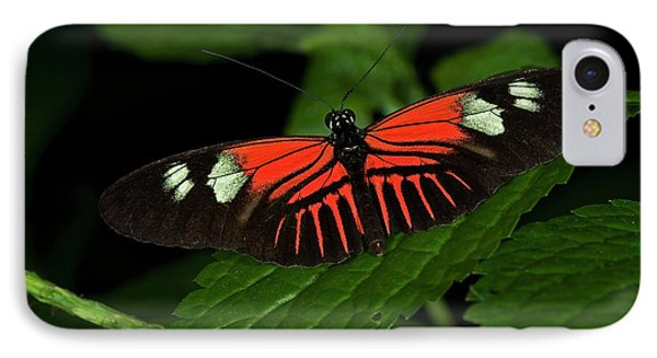 Doris Longwing Butterfly IPhone Case by JT Lewis