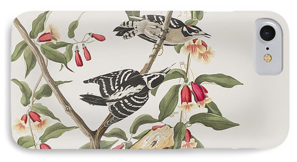 Downy Woodpecker IPhone 7 Case by John James Audubon