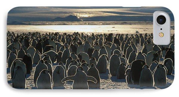 Emperor Penguin Aptenodytes Forsteri Phone Case by Pete Oxford