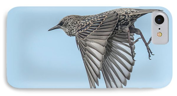 European Starling IPhone Case by Tam Ryan