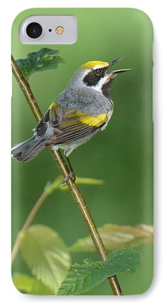 Golden-winged Warbler IPhone Case by Alan Lenk