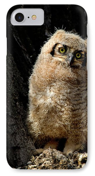 Great Horned Owlet IPhone Case