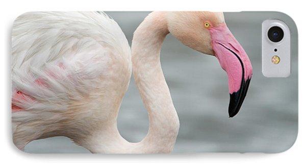 Greater Flamingo Phoenicopterus Roseus IPhone Case by Panoramic Images