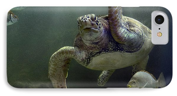 Green Sea Turtle Chelonia Mydas Phone Case by Tim Fitzharris