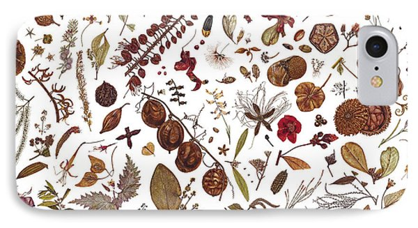 Herbarium specimen painting by rachel pedder smith - Model herbarium ...