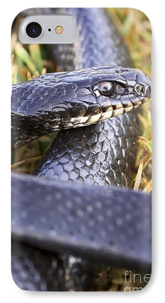 Large Whipsnake Coluber Jugularis IPhone Case by PhotoStock-Israel