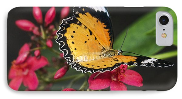 Malay Lacewing Butterfly  Phone Case by Saija Lehtonen