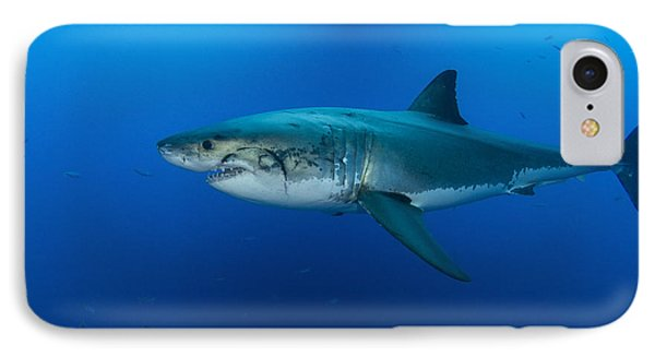 Male Great White Shark, Guadalupe Phone Case by Todd Winner