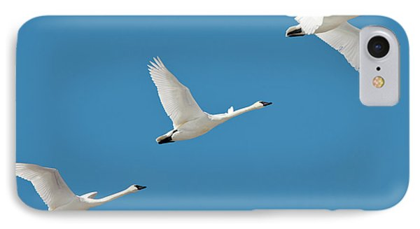 3 Montana Swans IPhone Case by Todd Klassy