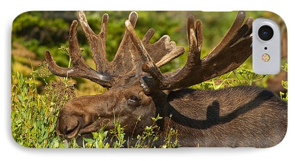 Moose IPhone Case by Sebastian Musial
