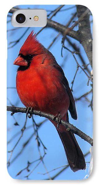 Northern Cardinal IPhone 7 Case