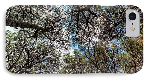 Pinewood Forest, Cecina, Tuscany, Italy IPhone Case