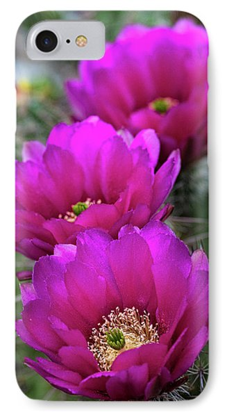 IPhone Case featuring the photograph Pink Hedgehog Cactus  by Saija Lehtonen
