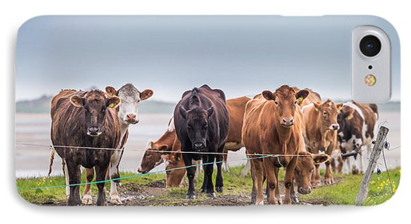Portrait Of Cows Grazing, Iceland IPhone Case by Panoramic Images