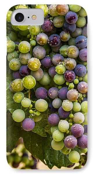 Red Wine Grapes Hanging On The Vine IPhone Case by Teri Virbickis
