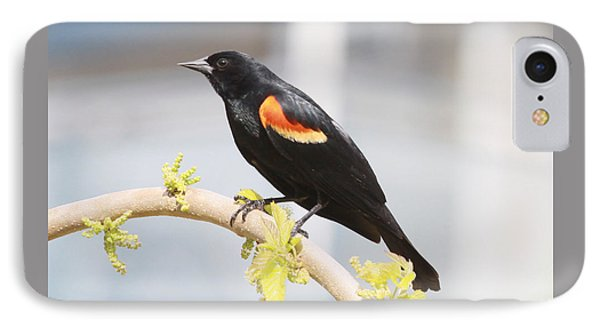 Red Wing Blackbird IPhone Case