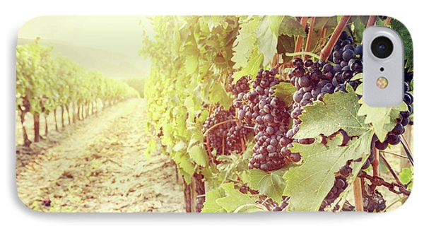 Ripe Wine Grapes On Vines In Tuscany Vineyard, Italy IPhone Case by Michal Bednarek