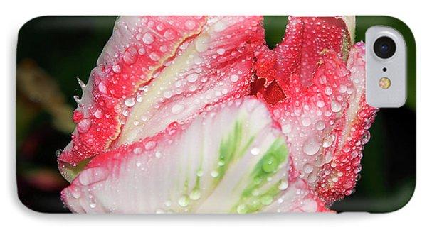 IPhone Case featuring the photograph Tulip by Elvira Ladocki