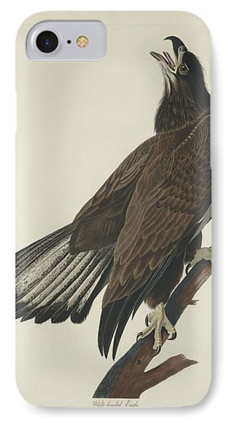 White Headed Eagle IPhone Case